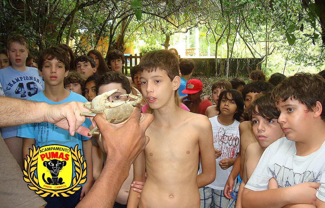 slidehome8 acampamento dos pumas